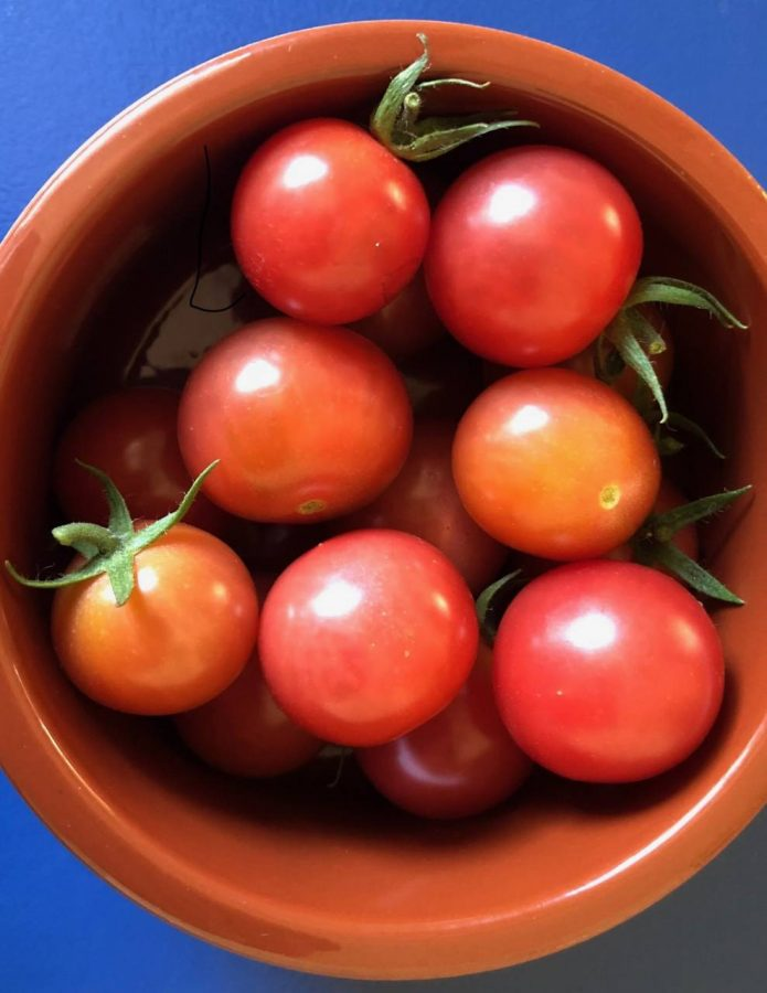 Tomatoes in the bowl